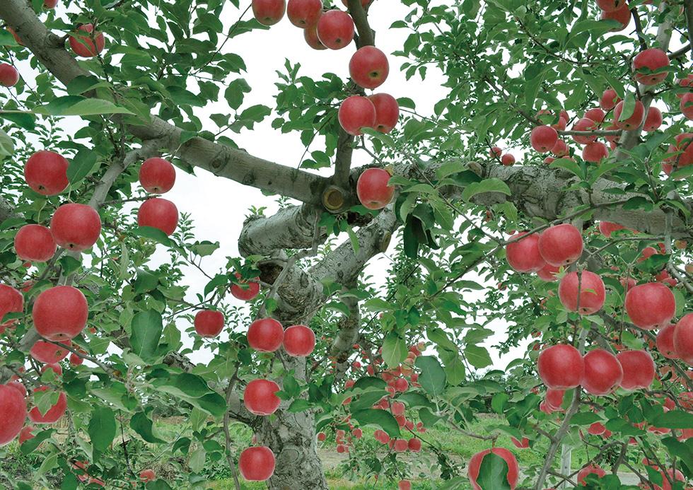 りんごの木 雑貨 資源活用