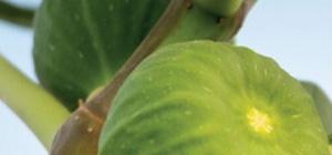 芳香剤 香り 種類